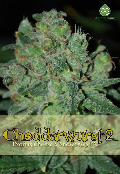Cheddarwurst 2
