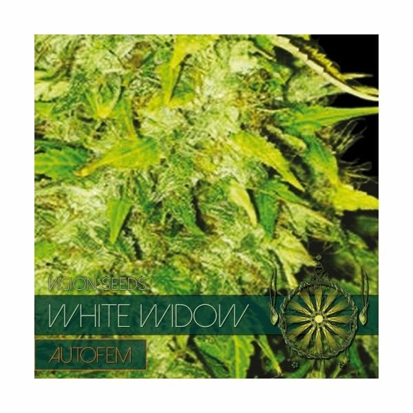 White Widow Autoflowering (V.S.)