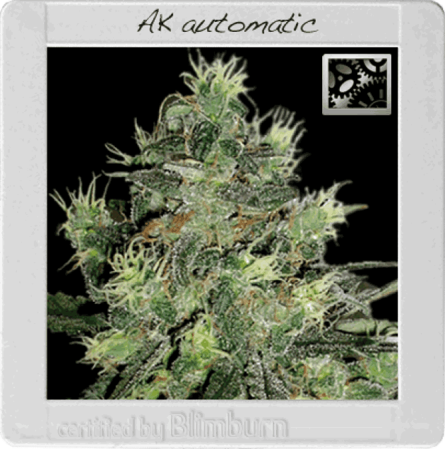 AK Auto (BBS)