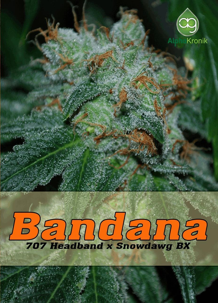 Bandana
