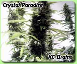 Cristal Paradise