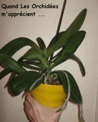 Divers plantes  ...