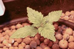 Ma plante 2