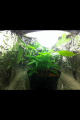 Aquaponie culture sous éco