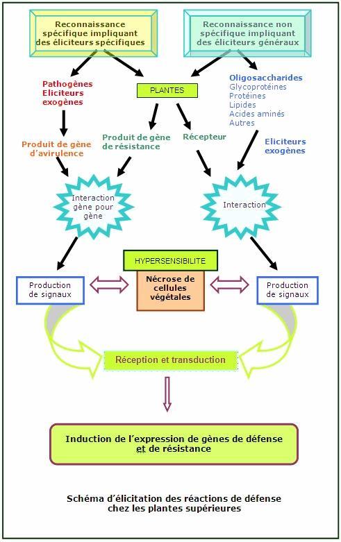 Le traitement rapide du microorganisme végétal du pied pour une application