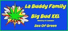 JDC Big Bud XXL