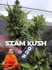 la Siam Kush à valls