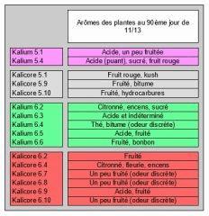 Session 2017 - Lignées Kalium & Kalicore - #5 & #6 - Arômes sur pied - 90ème jour de 11/13