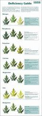 02 Deficiency guide - Canna