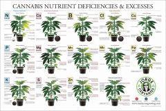 01 Cannabis nutrient deficiences & excesses - Jorges Cervantes