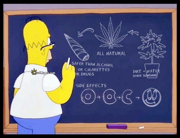 homer-cartoon-cannabis-facts-weedmemes.jpg
