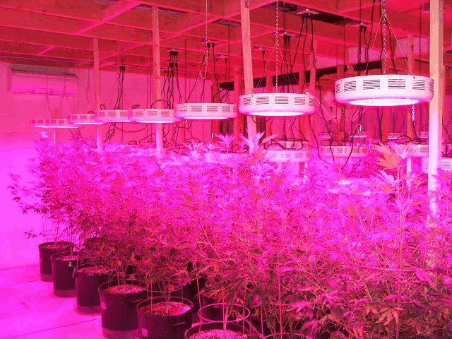 Eclairage 224 Led Et La Culture Du Cannabis Bricolage