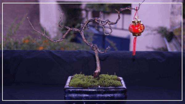 bonsaï chêne#1.jpg