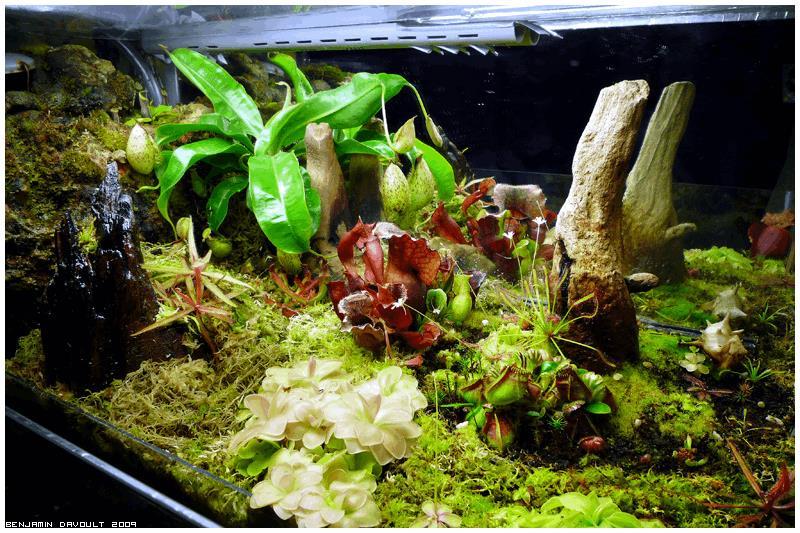 terrarium plantes carnivores turbo neon 100w 120 litres vos jardins cannaweed