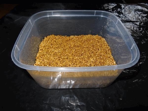Thé de graines gemées (SST)4.jpg