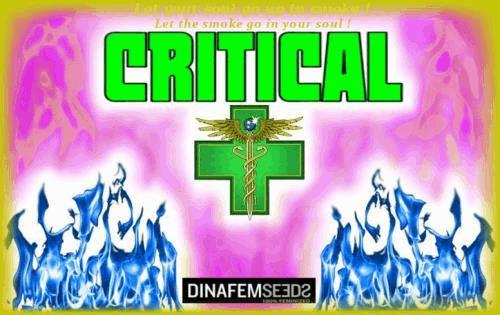 Critical+.jpg