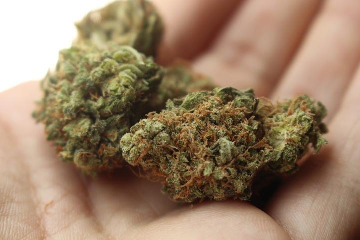 Les Québécois veulent faire pousser leur propre weed