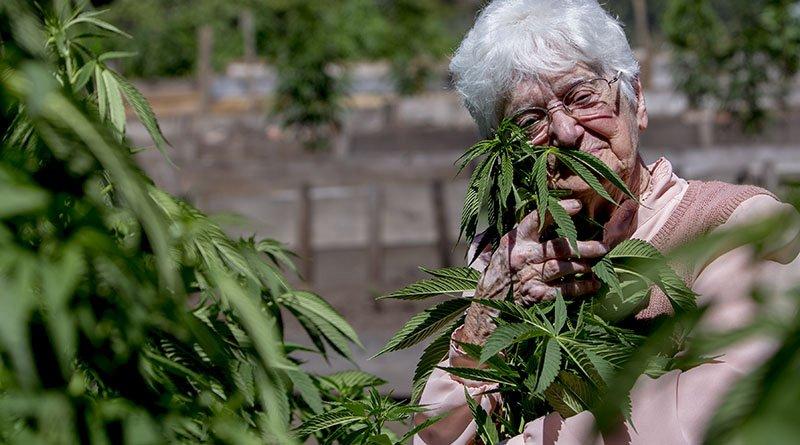 Faire fumer mémé ? Ces très sérieuses raisons pour lesquelles les personnes âgées feraient bien de consommer du cannabis