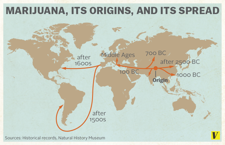 marijuana_origins_spread.0.png.f2cb7d2ba13bbea66a72a33008353d13.png