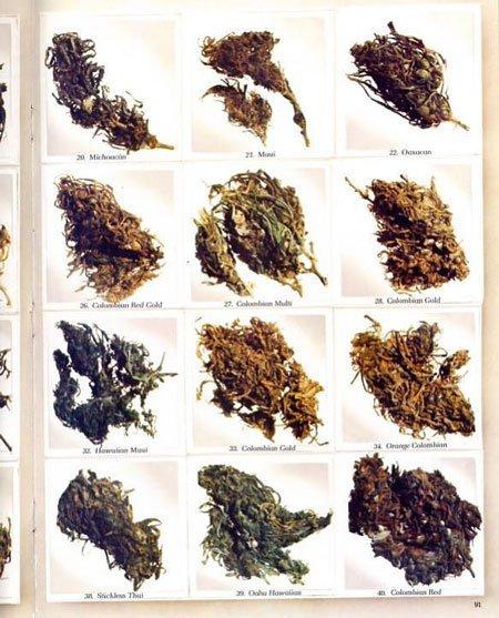 high-times-top-strains-1977-sm.jpg.f82265e7533c46666317d9a245432014.jpg