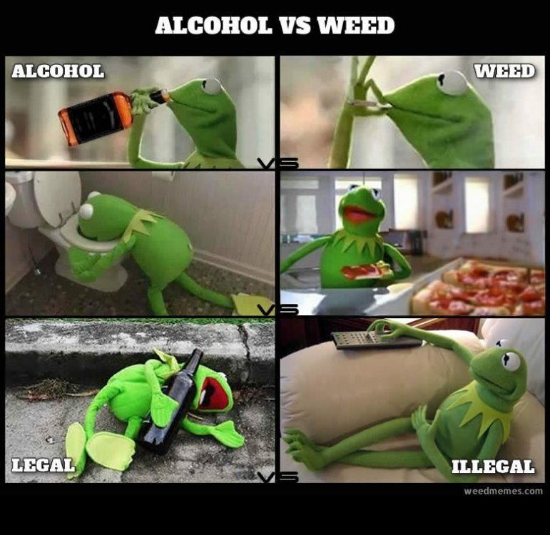 kermit-alcohol-vs-weed-memes.thumb.jpg.dae0ac42edc09079e80e2db99d38a606.jpg