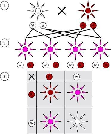 non-mendelian-inheritance.jpg.6b825390f30cef9f5a940c5559dd5163.jpg