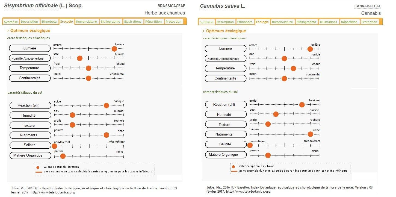 Ecologie - Optimum et caractéristiques climatiques - Cannabis sativa et Sisymbrium officinale.jpg