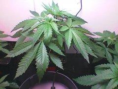 Plant n°4 - 8 avril