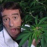 cacannabis