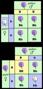 mendel-148x300.png.4d1a6a805fc6a0f53c37b9be7a3f5dec.png