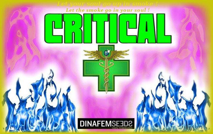 5b2cb5041ce19_Critical.jpg