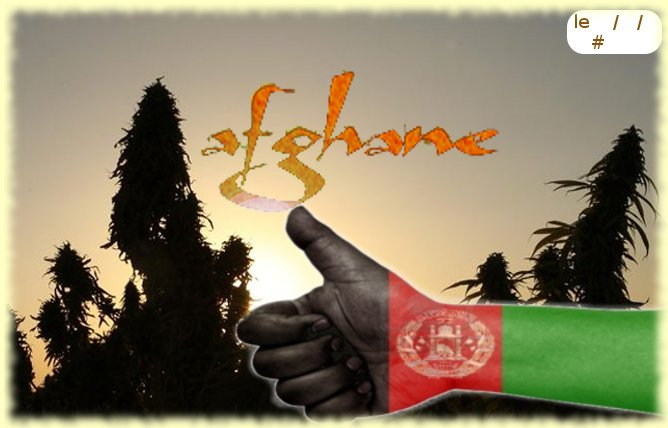 Afghane.jpg
