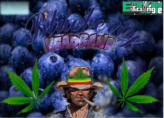 BlueberryHeadband.jpg