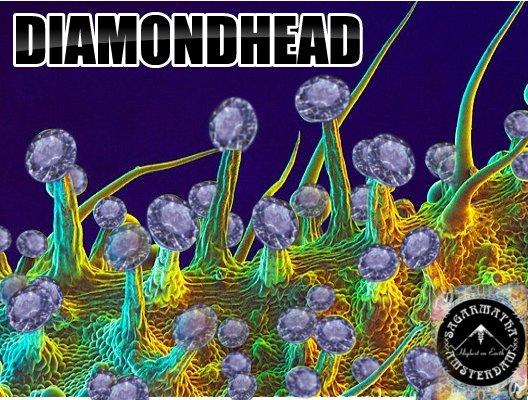 DiamondHead.jpg