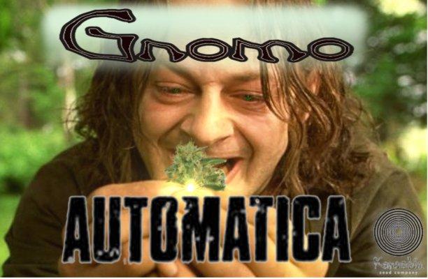 GnomoAutomatica.jpg