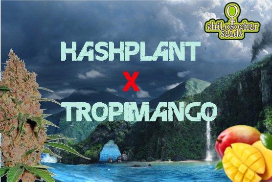 HashplantXTropimango.jpg