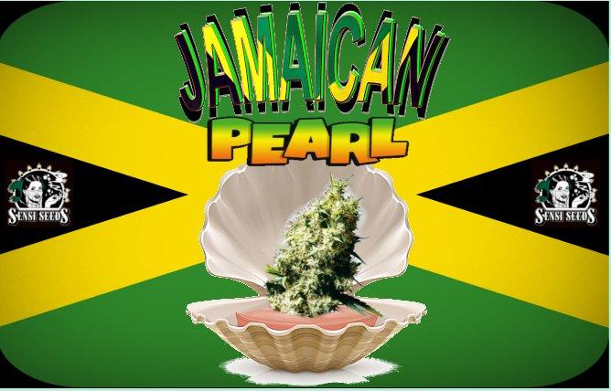 JamaicanPearl.jpg
