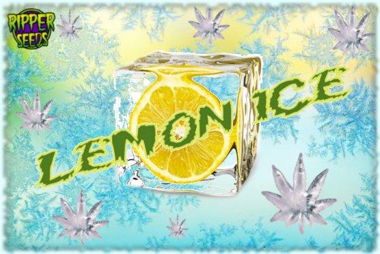 LemonIce.jpg