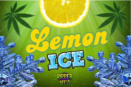LemonIce1.jpg