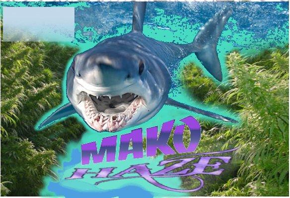 MakoHaze.jpg