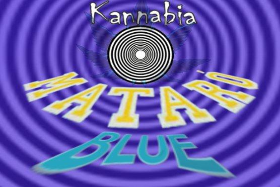 MataroBlue.jpg