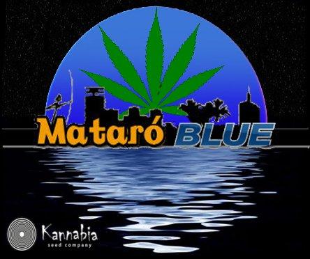 MataroBlue0.jpg