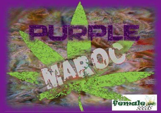 PurpleMaroc.jpg