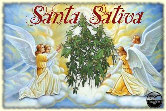 SantaSativa.jpg