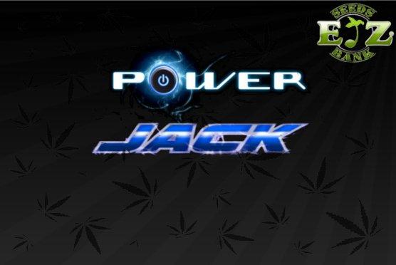powerjack02.jpg