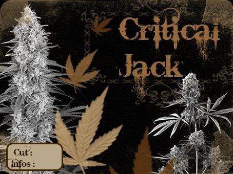 1016513410_criticaljack.JPG