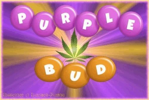 1102222305_purplebud.JPG