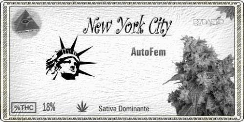 1136728917_newyorkcityautofem.JPG