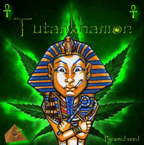 1181519090_tutankhamonpyramidseeds.PNG