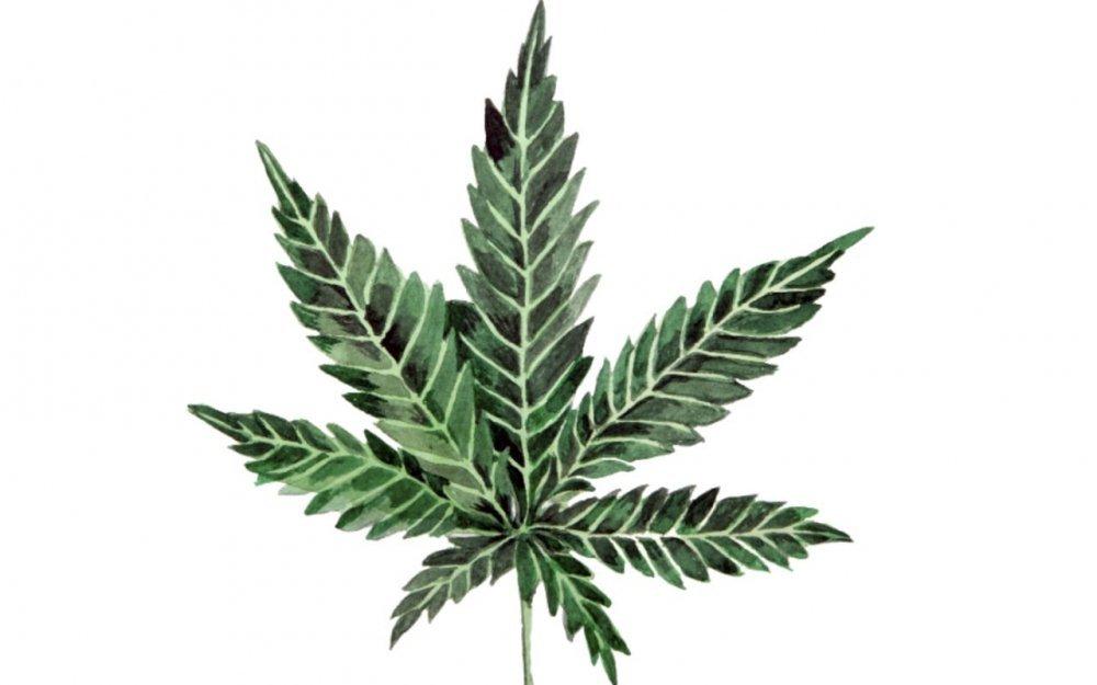 Cannabis thérapeutique : «Allons plus vite, madame la ministre !»